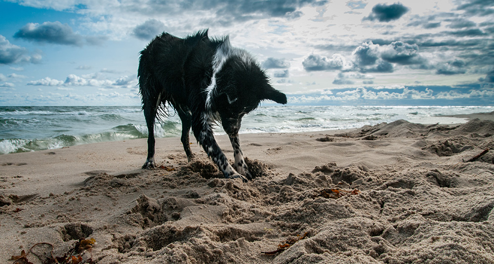 playa para perros granada